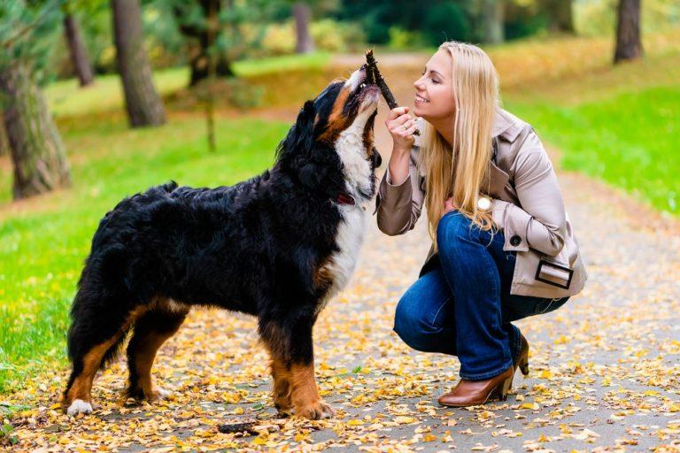 11 парков для собак в Чикаго