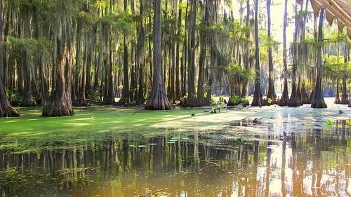 озеро Каддо Техас