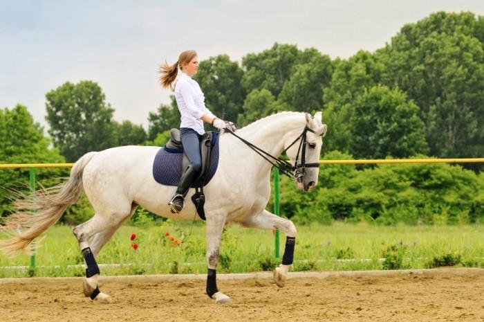 Девушка на лошаде