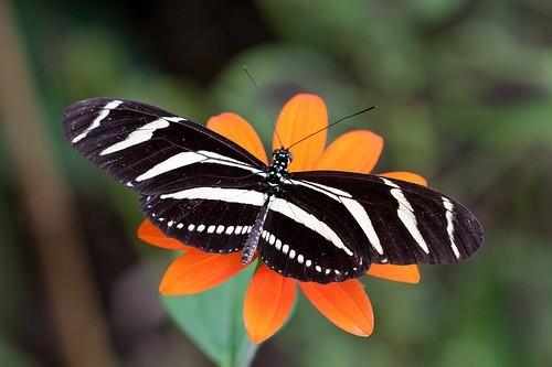 Мир бабочек, Форт-Лодердейл