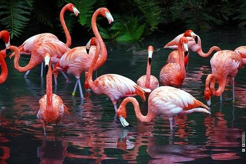 Сады фламинго, Форт-Лодердейл