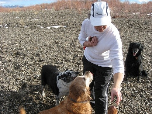 Женщина кормит собак