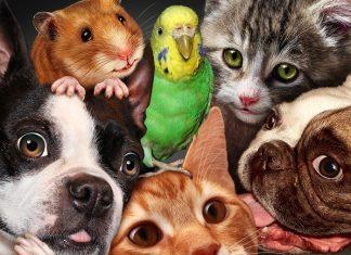 7 вопросов и ответов про домашних животных