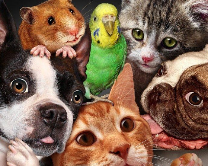 Кот, собака, хомяк, попугай