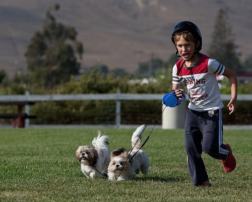 Мальчик бежит с собачатами