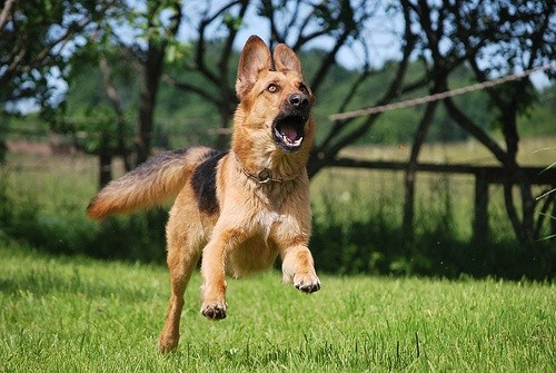 Пес бежит за палкой