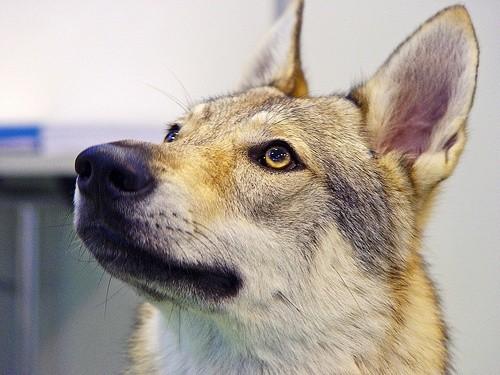 Собака смотрит вверх