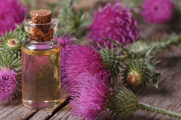Репейное масло — помощник красоты и здоровья