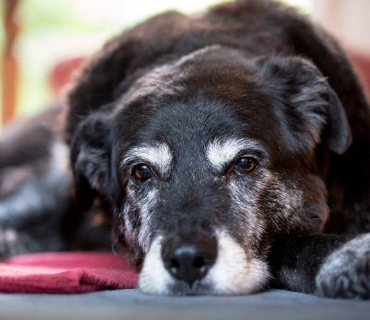 Черная собака лежит на полу