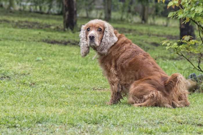 Собака сидит на траве в парке
