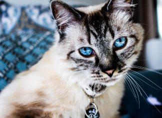 10 популярных кличек для кошек