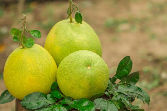Три помело с зелеными листиками