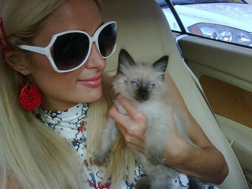 кошка Пэрис Хилтон