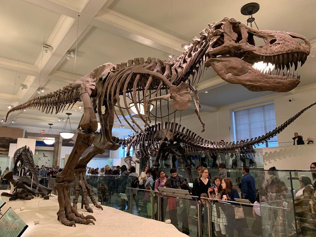 Американский музей естественной истории - American Museum of Natural History
