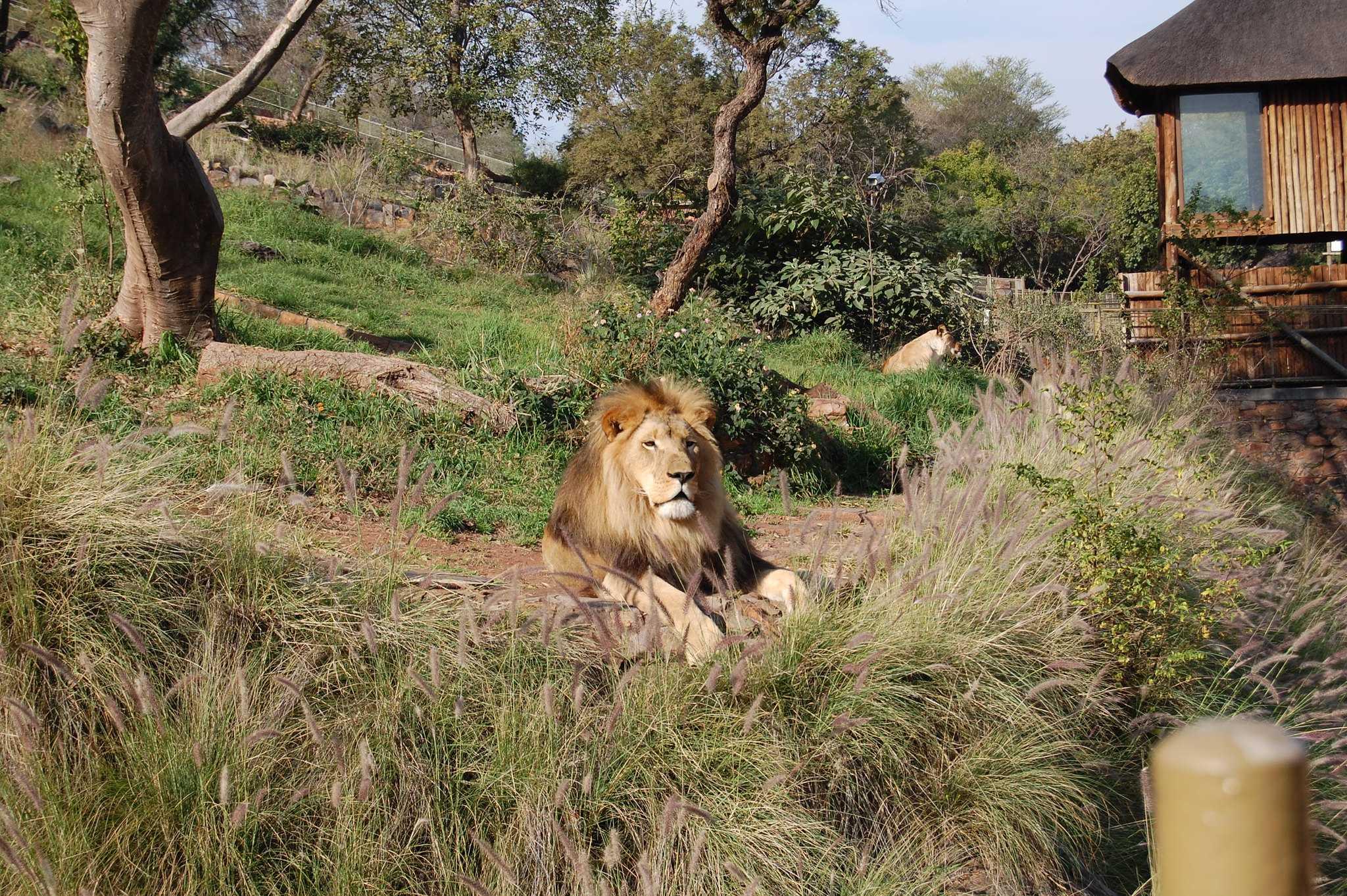 Pretoria zoo Национальный зоологический сад, Южная Африка