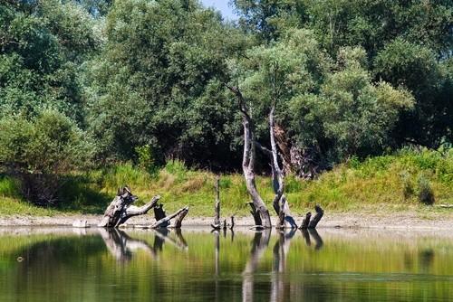 Национальный парк «Копачки Рит»