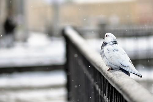 7 Способов Помочь Птицам и Животным Пережить Зиму