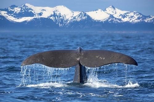 10 Мест, Где Вы Сможете Увидеть Китов