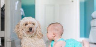 Как выбрать домашнего питомца для ребенка-аллергика