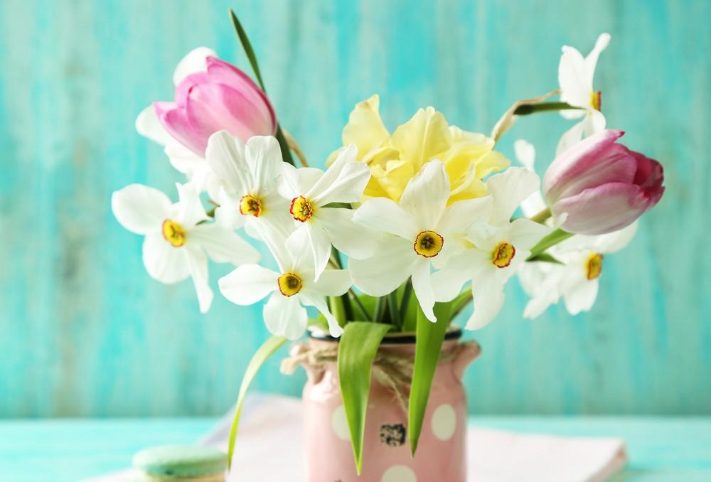 Семейство Лилейные (тюльпаны, нарциссы)