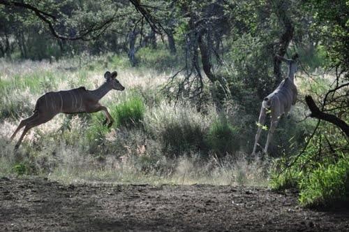 Заповедник Mundulea, Намибия