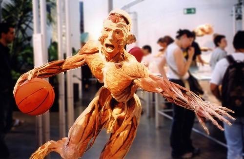 Передвижная выставка Мир тела
