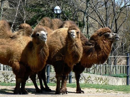 Зоопарк в парке Линкольна, Чикаго