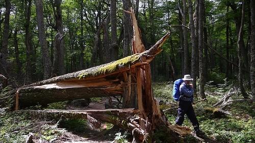 Поход в леса Патагонии