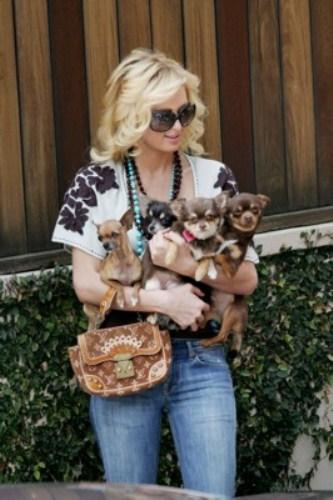 Пэрис Хилтон можно назвать любимицей собачек