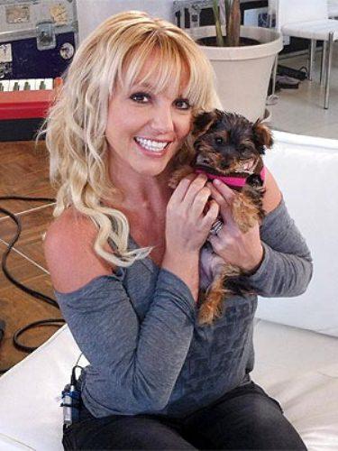 Бритни Спирс и собачки
