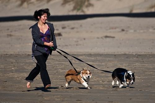8 Упражнений, Которые Вы Можете Делать, Выгуливая Свою Собаку