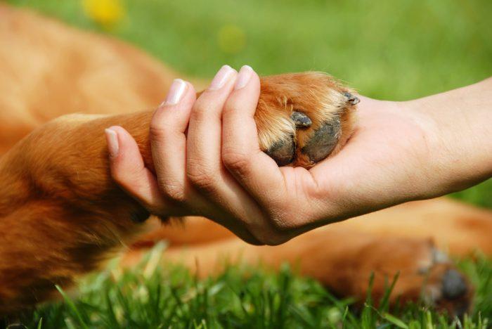 В женской руке лапа собаки