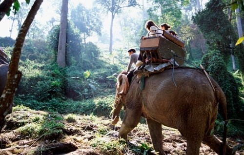 Езда верхом на слонах