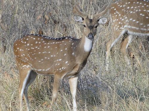 Национальный парк Канха, Индия