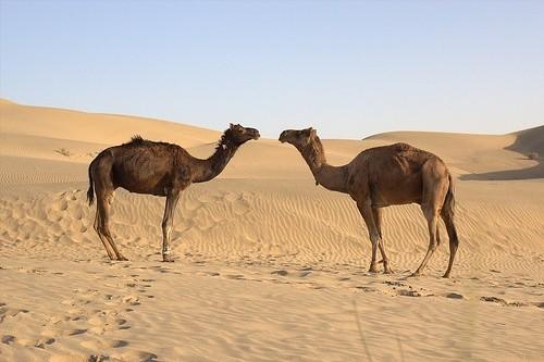 Пустыня Тар, Индия