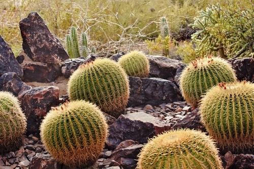 Пустынный ботанический сад, Аризона