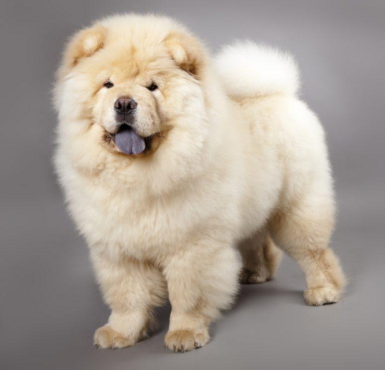 7 самых милых пород собак