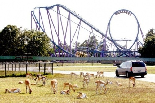 парк Six Flags Great Adventure and Wild Safari, Нью-Джерси, США