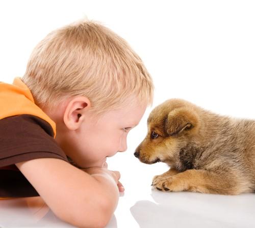 7 Причин Подарить Ребенку Щенка