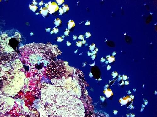 Рифы Туббатаха в национальном природном парке