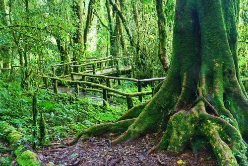 Тропическому лесу на Борнео уже более 130 миллионов лет