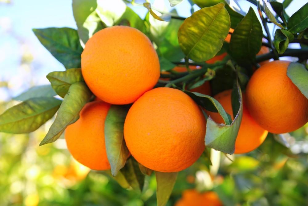 Апельсины из Валенсии