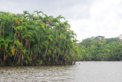 Тропический лес Амазонки, Южная Америка