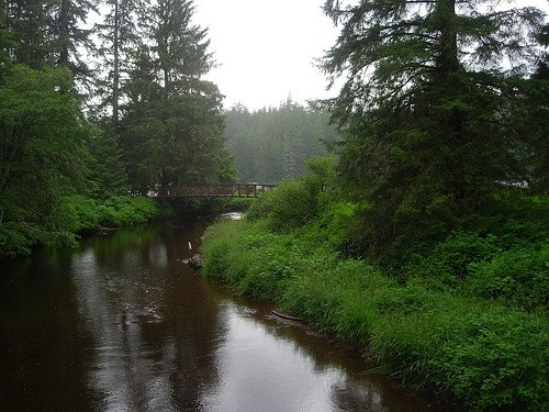 Национальный лесной заказник «Тонгасс», США
