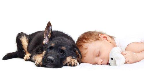 Как Приучить Домашнее Животное к Новорожденному Малышу?