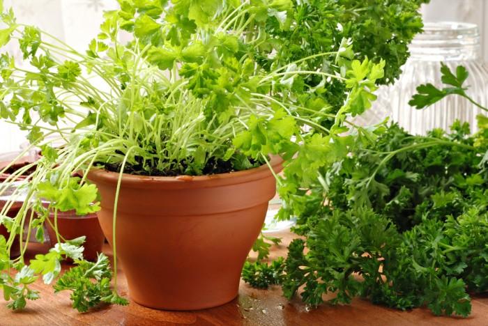 8 продуктов, которые зимой легко вырастить дома