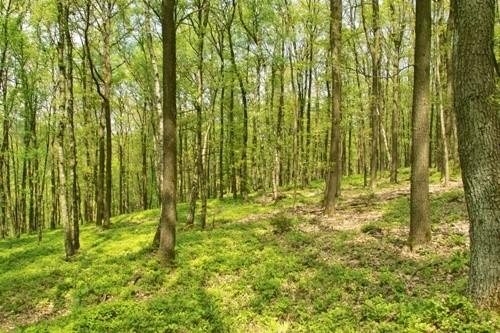 Шервудский лес, Англия