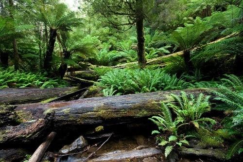 Тропический лес Инленд, Канада