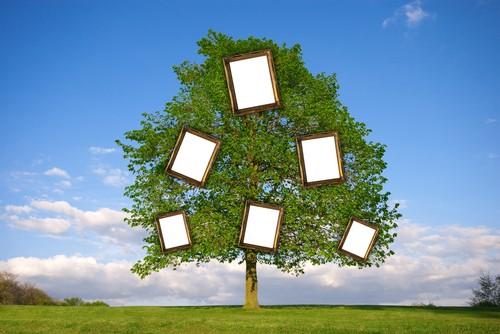 Исследовать свое генеалогическое дерево