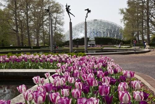 Ботанический сад Миссури, Миссури